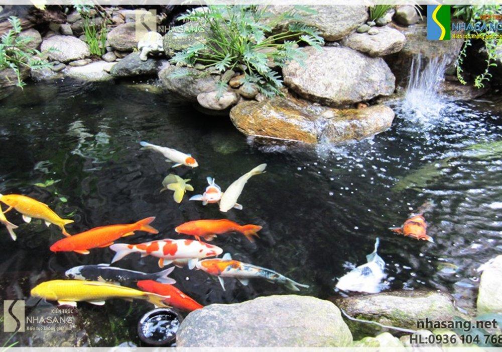 Thi công Hồ cá Koi HK15002 loại nhỏ